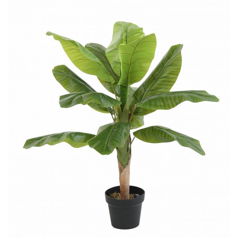 Bananier tree 1