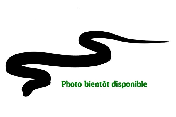 Serpent ombre58 z c322 c412 c248 c199 c218 1